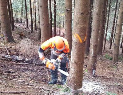 Die Waldarbeiter